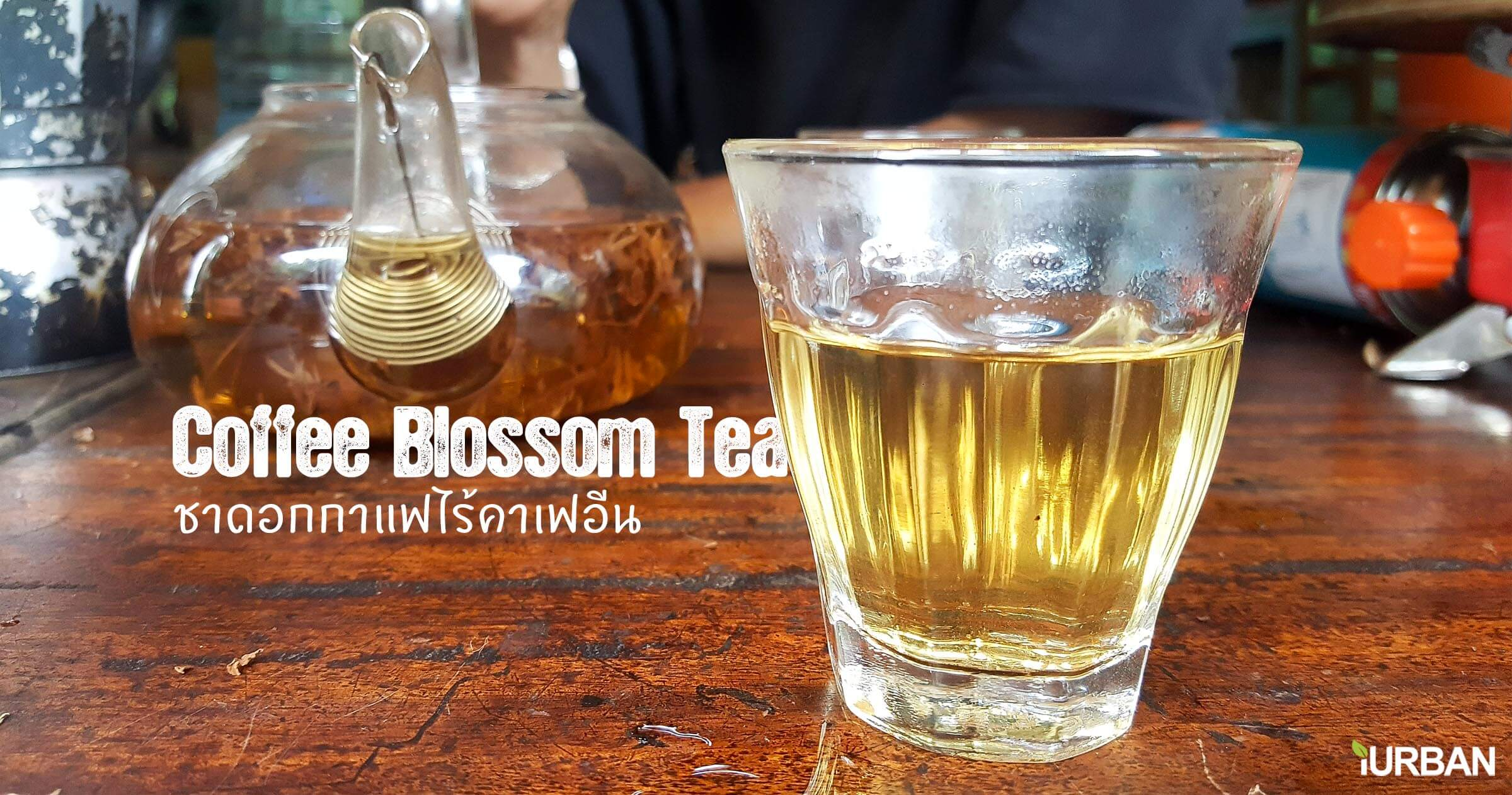Coffee Blossom tea ชาดอกกาแฟมากประโยชน์ ไร้แทนนินและคาเฟอีน 6 - DIY