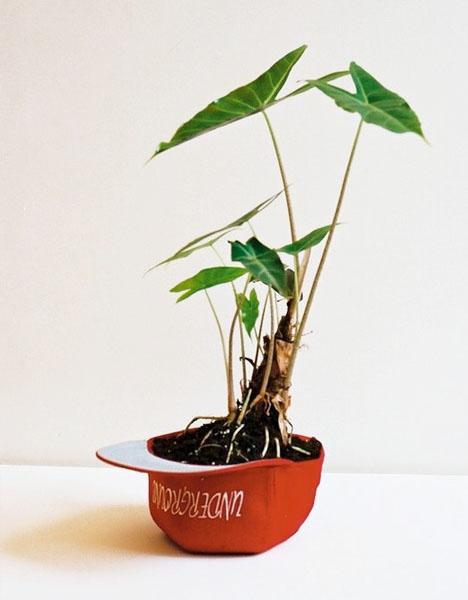 Plant Apparel..มาปลูกต้นไม้ในของใช้ใกล้ตัวกัน 13 - DIY