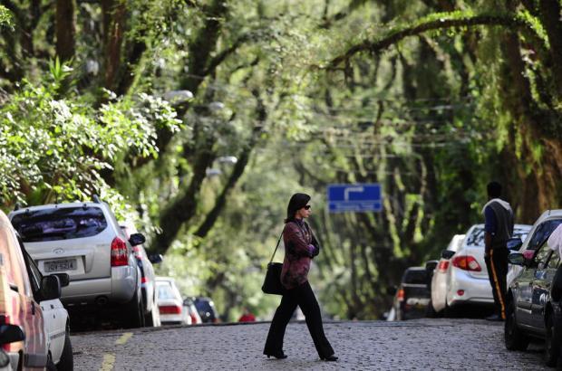 """ถนนสายต้นไม้ ที่ประเทศบราซิล """"Rua De Carvalho Goncal"""" 13 - tree"""