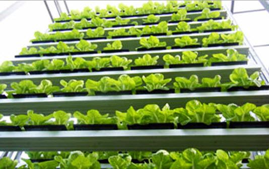 11 17 2012 8 13 43 PM highlight greenery