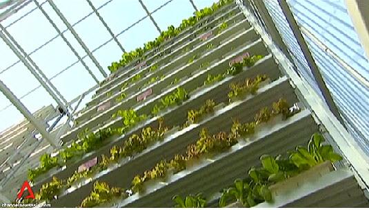 สิงคโปร์ ทำสวนผักแนวตั้งเพื่อการค้าเป็นครั้งแรกในโลก