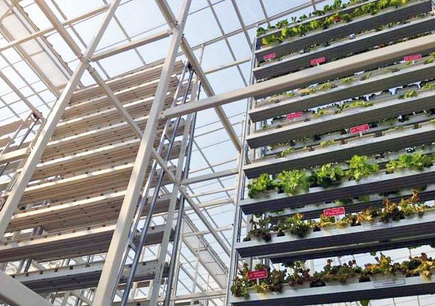 11 17 2012 8 15 47 PM highlight greenery