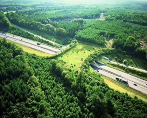 สะพานสีเขียว เพื่อสัตว์ป่าข้ามถนน 2 - Wildlife bridge