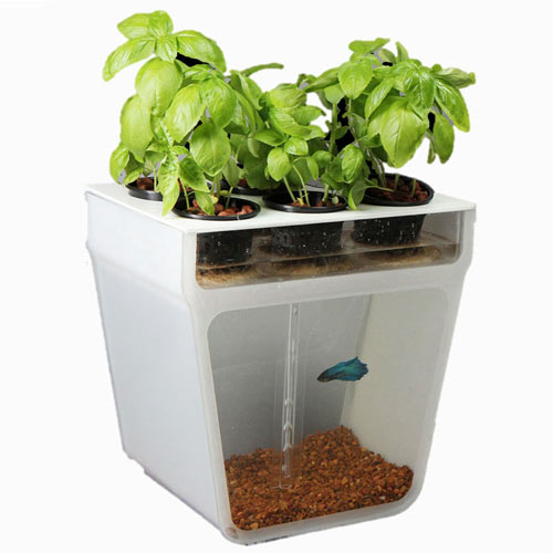 Self cleaning fish tank garden for Self cleaning fish tank
