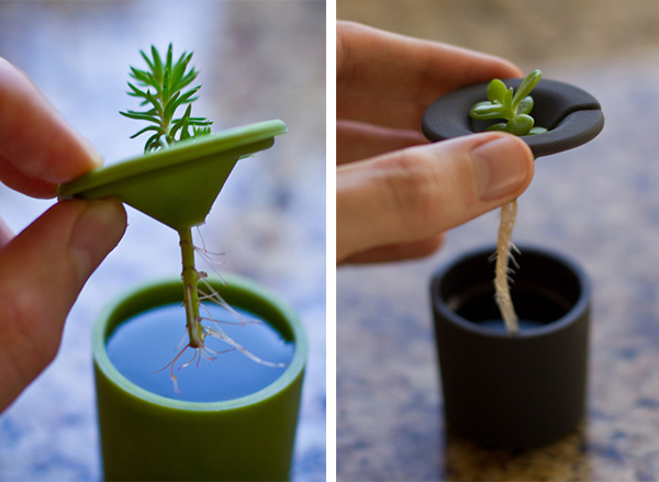 Rootcup ปลูกพืชแนวใหม่ 13 - cup