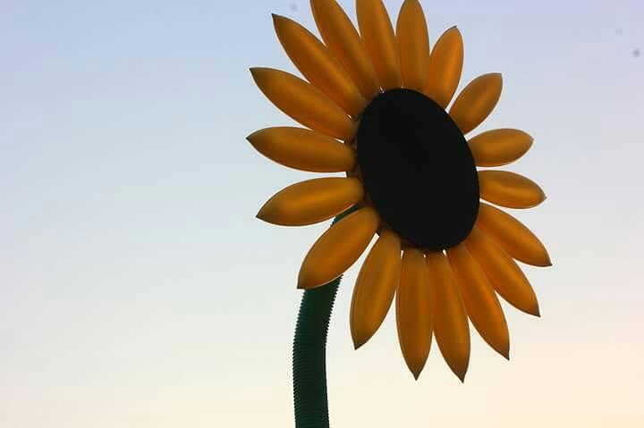 ประกวดภาพถ่าย ประติมากรรมแสงดอกทานตะวัน