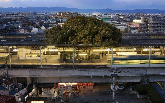 สถานีรถไฟญี่ปุ่นเจาะสถานีเพื่อรักษาต้นไม้อายุ 700 ปี 8 - GREENERY