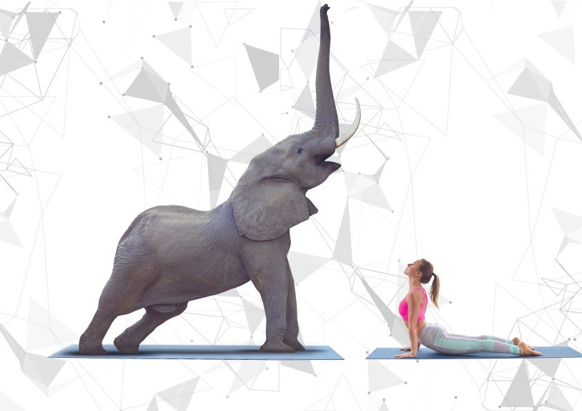 Gentle Giant Yoga at the 2018 King's Cup Elephant Polo Tournament 2 -