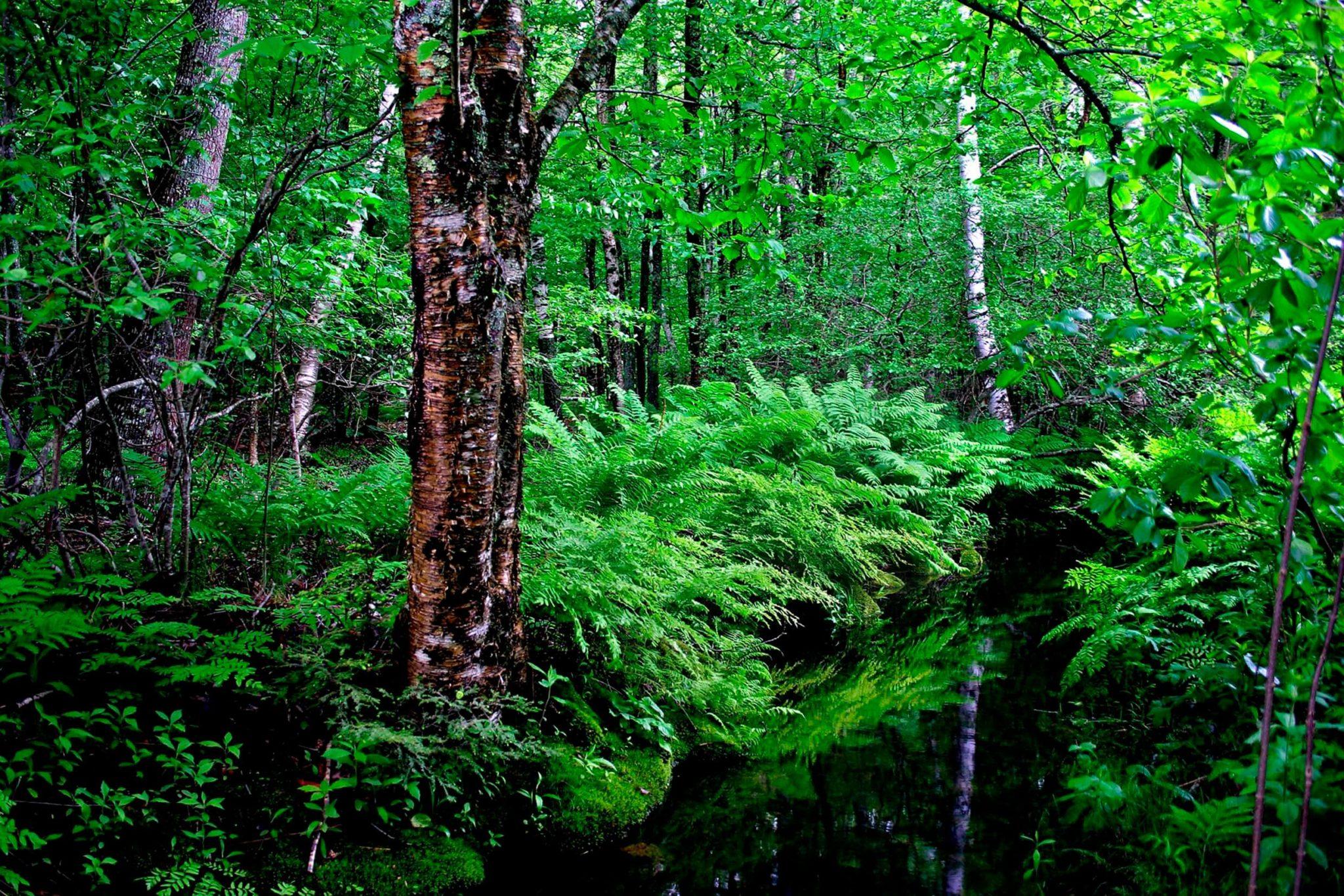 สายเดินป่าต้องรู้! 5 กิจกรรมเดินป่าอย่างไร ไม่รบกวนธรรมชาติ 2 - Environment