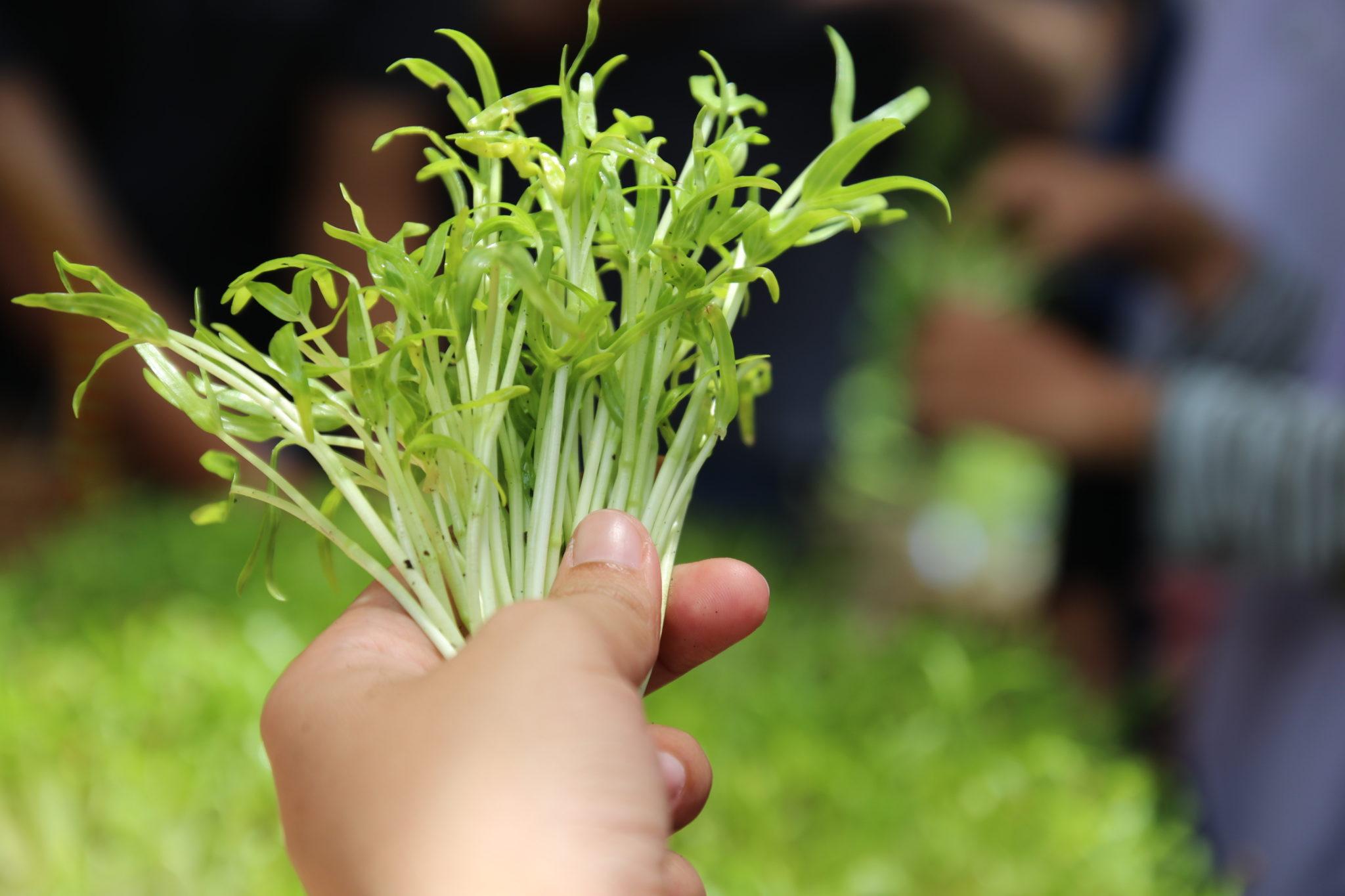 สามพรานโมเดล อะคาเดมี่ เปิด5เทรนด์ น่ารู้สำหรับผู้บริโภคอินทรีย์รับปี2562 พร้อมเปิดหลักสูตรการขับเคลื่อนเกษตรอินทรีย์ตามแนวทางสามพรานโมเดล 13 -